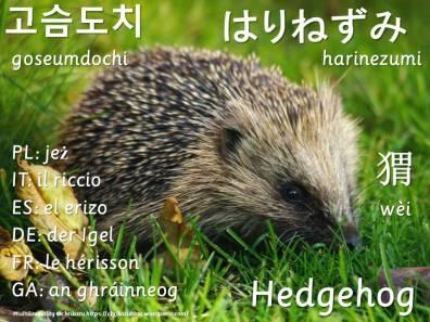 multilingual flashcards hedgehog