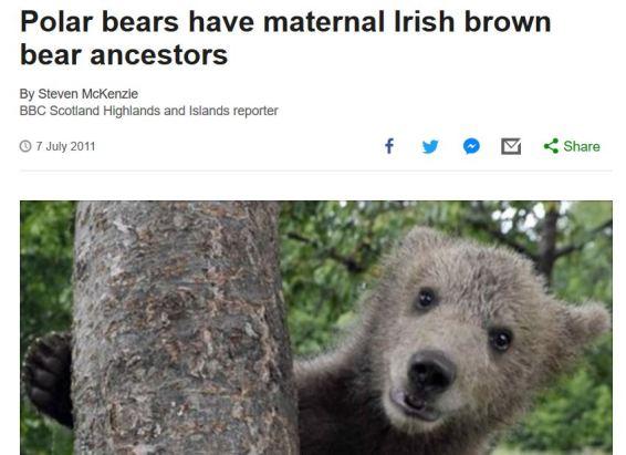 polarbearsbrownbears