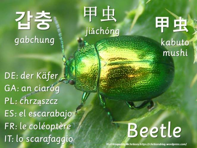 multilingual flashcards beetle