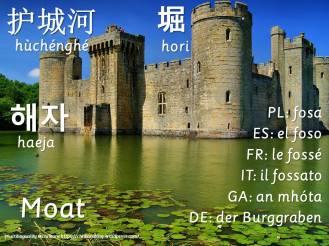 multilingual flashcards moat