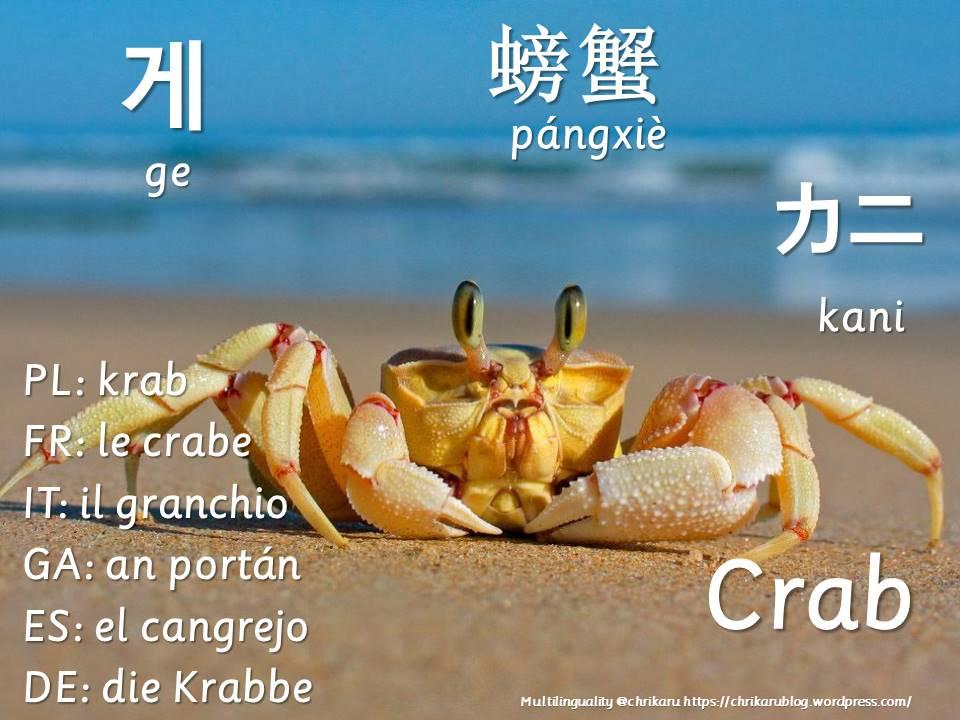 multilingual flashcards crab
