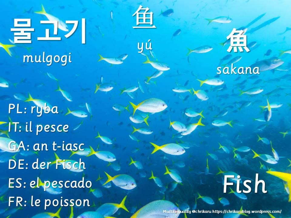 multilingual flashcards fish